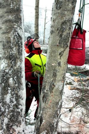 Kristofer Eliason arbetar som arborist.
