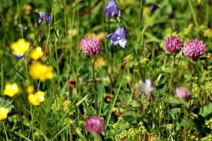 En ängsmark kan hysa flera tiotals arter –per kvadratmeter.