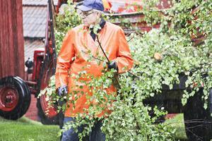 Tidigare kommunalrådet Björn Mårtensson tyckte det var mer sport att arbeta ute i regnet. Alla björkar som hade tagits skulle bli material för lövgirlangerna i midsommarstången.