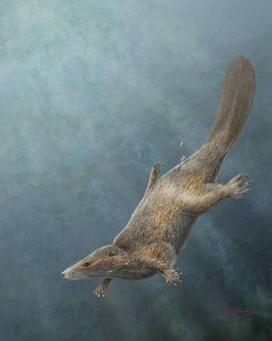 Bland de primitiva däggdjur som levde under dinosauriernas tid fanns även arter som var anpassade för vattenliv.   Mark Klingler