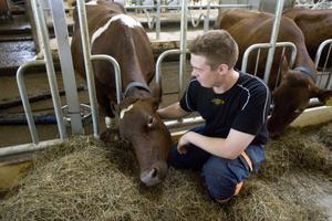 Erik Löfgren är 29 år och heltidsbonde. Han har övertagit familjejordbruket, och de senaste veckorna har han flyttat över djuren till nya lokaler.