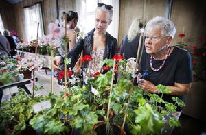 Linnea Sandhagen besökte pelargondagarna på Vallby friluftsmuseum. tillsammans med sin mormor Ingegärd Hellsten.