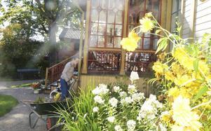 Även nu på hösten blommar det intill husväggen.