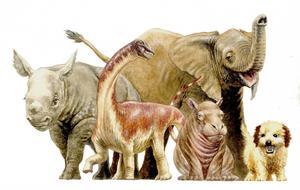 Djurungar har oftast annorlunda proportioner än vuxna djur. Men de jättelika sauropodernas ungar avvek från normen. De föddes med samma kroppsproportioner som sina föräldrar.   Foto: D. Vital
