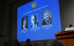 De tre pristagarna; Jeffrey C Hall, Michael Rosbach och Michael Young.