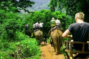 Att rida på elefanter är en av de turistaktiviteter som är plågsam för djur, enligt World Animal Protection.