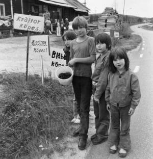 Ort: Holmsveden   Rubrik: Hur mycket får vi för hinken?   Bildtext: Här är det fyra unga karlssöner från Ängarne och Mohed som tänker göra kräftaffärer med storuppköparen Sven Brusén i Holmsveden.