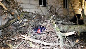 Ett stort äldre träd mer eller minmdre krossade en parkerad bil bakom Frimurarlogen i Örebro.