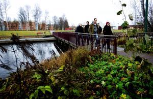 Tre gånger i veckan har en grupp IT-konsulter på Sogeti i Borlänge möten direkt efter lunchen under en halvtimmes lång promenad.