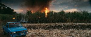 Brinnande sockerrörsfält i dokumentärfilmen