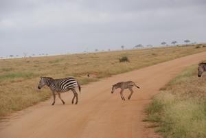 Denna fotades när vi var på Safari i East Tsavo i Kenya,en underbar resa med massor av vackra djur!