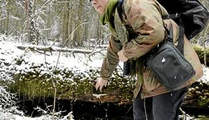 Färglik. – Det liknar tjock vit färg, säger Kajsa Grebäck. Skinn och mängder av organismer bryter ned död ved.