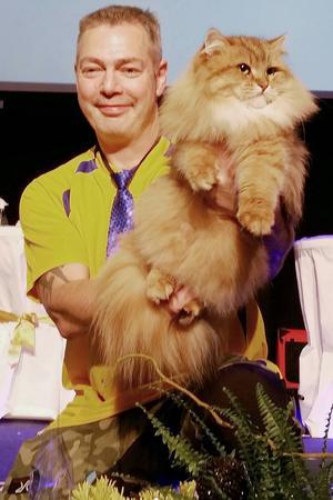 Sivan har utsetts till världens vackraste katt. Ägd av Sören Kedert, Norberg, uppfödd av Britt Ellenius.