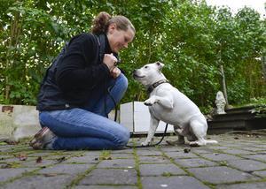 Scrubs är som Mias egen hund, men ibland hämtar hans uppfödare honom för att han ska göra sitt jobb som avelshanne.
