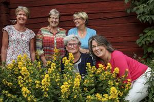 Eva-Carin Andersson, Barbro Wedekind, Eva Hallberg, Kersti Helander och Eva-Lotta Berg har gjort studierna till en konstform.