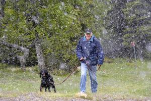 Snön faller tung över höjderna runt Idre den 27 juni, Alf Nilsson rastar hunden Sessan på Nipfjällets vinterparkeringen, som på fredagen verkligen gjorde skäl för namnet.