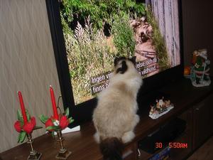 Tello älskar att titta på djur- och naturprogram på tv.