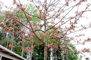 Fruktträd med röda blad.