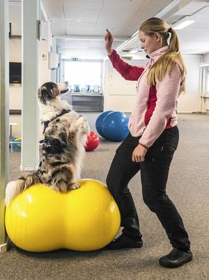 Sitta fint på bollen är avancerad träning. För att vara trygg på bollen, gäller det först att klara övningen på marken. Bollen är unik då den går att göra alltmer rörlig och på så sätt öka svårighetsgraden.