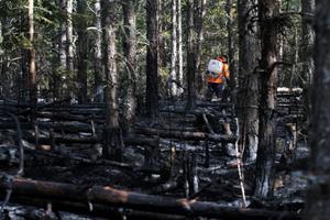 Brandkåren lämnade under fredagsförmiddagen brandområdet, och lämnade över eftersläckningsarbetet till markägaren.