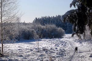 Tog bilden en kall morgon när jag gick en promenad med labradorenPim-Pim.