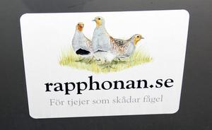 Rapphönan- för kvinnliga fågelskådare.