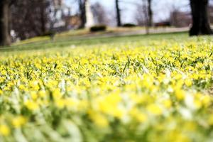 Bild tagen i Västerås vackra Vasapark en härlig vårdag.