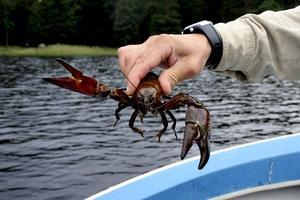 Populärt fiske. Tillfälligheter styr resultat i både fiske och jakt. Det är lite av tjusningen. Vilka som fått kräftlande i år i Lindesjön går att se på www.lindesjöns-fvo.se Arkivbild