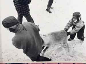 Här är det Tove-Mathilda som knuffar en ren.