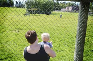 Det är inte långt till savannen – bara staketet är i vägen för Gunnar Hällberg och Linda Thomasson från Östersund.