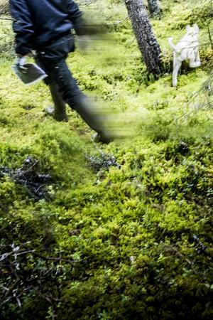 Flera heldagar jobbar Ralf Lundmark med att inventera det stora skogsområdet mellan Offerdalsberg och Almåsa.