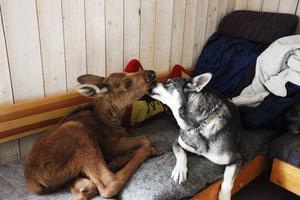 Ruben och Ronja är bästa vänner.