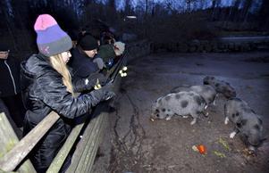 Alice Åström var mycket nöjd med Furuviksbesöket.– Det här var roligt och spännande. Det var roligt att åka karusell – vi har åkt kaffekopparna och drakarna – och spännande med alla djuren.