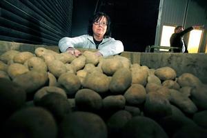 På senare år har Alborga potatis ändrat sina metoder för att minska utsläppen.– Men vi kan inte avstå helt från konstgödsel. Mjölkbönder kan ju använda naturlig gödsel från djuren, men den möjligheten har inte vi, säger Gun Eriksson.