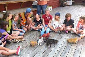 Det är inte bara boskap och andra djur på gårdar som blå stjärnor lär sig att ta hand om. Deltagarna på sommarens djurläger gjorde besök på Norrtälje kattcenter. – Barnen fick bekanta sig med kattungar och fick lära sig att de inte är ett slit och slängdjur, berättar Linda Eriksson, lägerarrangör.