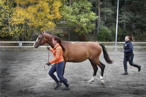 träning. Lovisa Andersson och Nadja Oscarsson, som är praktikant, springer med hästen Castello.