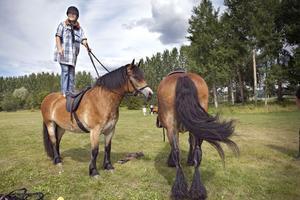 På Långnäs bjöds det på hästtricks. Prova hemma endast om du har en häst med lugnt temperament.