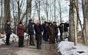 Många hade samlats i Bergvik för att få en skymt av den Vitryggiga hackspetten.