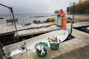 Gösfisket på Hjälmaren miljöcertifierades 2006 och har blivit den stora och viktigaste delen av fisket på Hjälmaren. Hans Johansson landar fisk i sin hamn i Sandshagen, vid Göksholm.