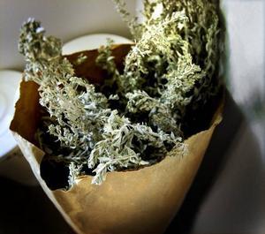 Salvia. Den vita salvian har torkats genom solvärme på ett nät. Salvia är en av de växter som används i Susanne Bilskis hudvårdsprodukter.