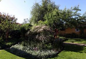 Husets baksida. En lummig och frodig engelsk trädgård med asiatiska inslag. De gamla fruktträden från 20- talet är kvar och ger fin skugga i trädgården.