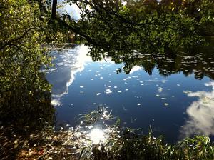 En vacker naturstudie av Långforsen längs Gröna gången i Sala, där himlavalvet speglar sig i vattnet.