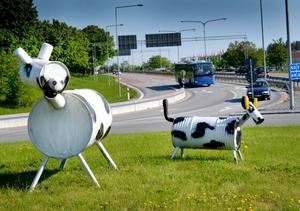 Kon och kalven i Rejmesrondellen.