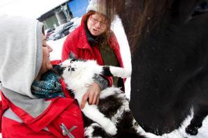Marie Jansryd och Margaretha Andersson är båda hästterapeuter från länet som ska åka ner till Italien  i mars för att behandla de vanvårdade hästarna. Maries katt Sigge och hennes häst Kilian får däremot stanna hemma.
