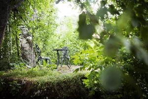 I Wictoria och Peter Boijes trädgård i Fanbyn är det inte svårt att ta vackra bilder.