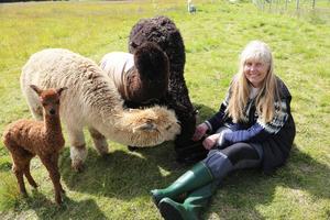 Birgitta Ericsson med några av de sociala alpackorna på Vemdalfjällens Alpackor.