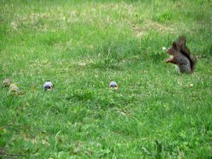 Ingen rädder för ekorren här...men ett litet avstånd är det bäst att hålla.