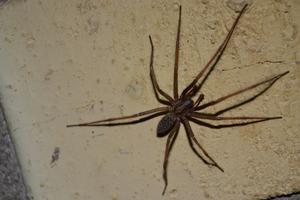 Denna stora höst-spindel sökte sig in i värmen..