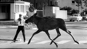 Juni 1970. Korsningen Skjutbanegatan-Markörgatan.