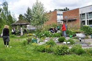 På lördag visas geologiska trädgården och sex andra privata trädgårdar i Strömsund.